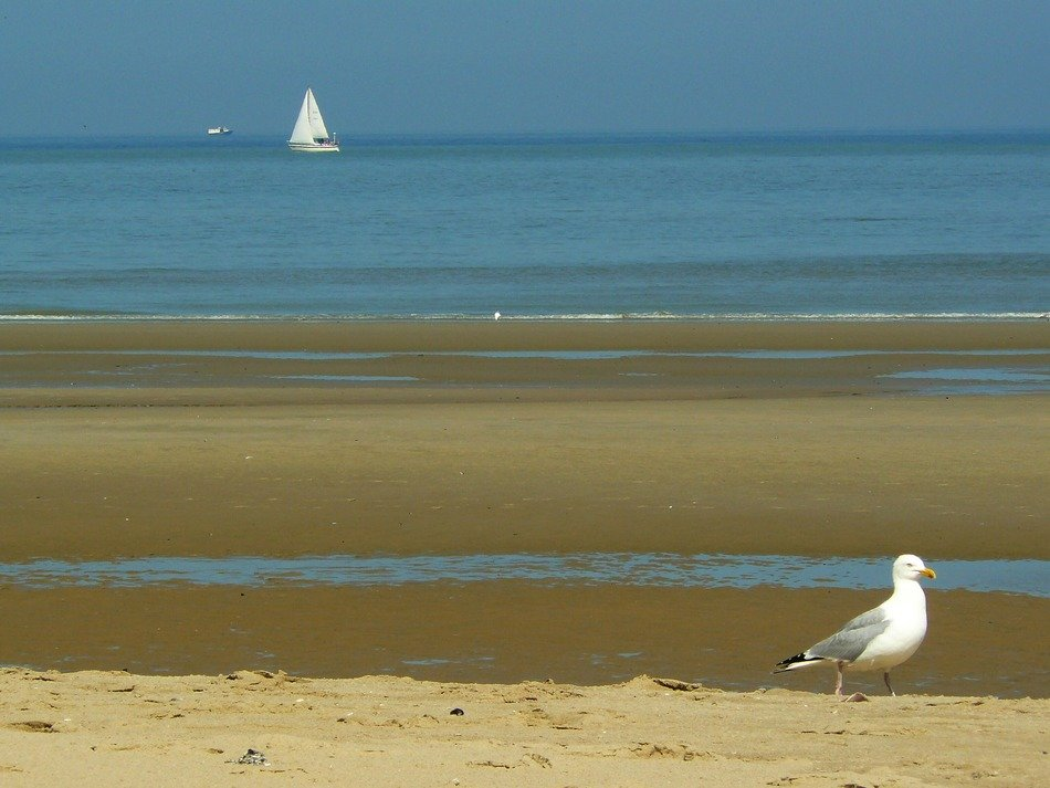 white yacht and seagull on the North Sea