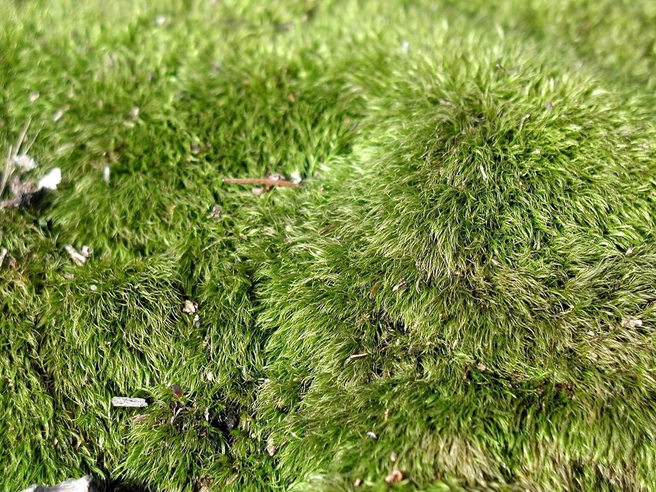 green moss as a carpet