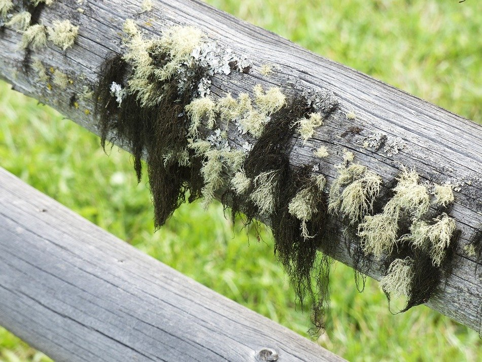moss covered old wooden fence close