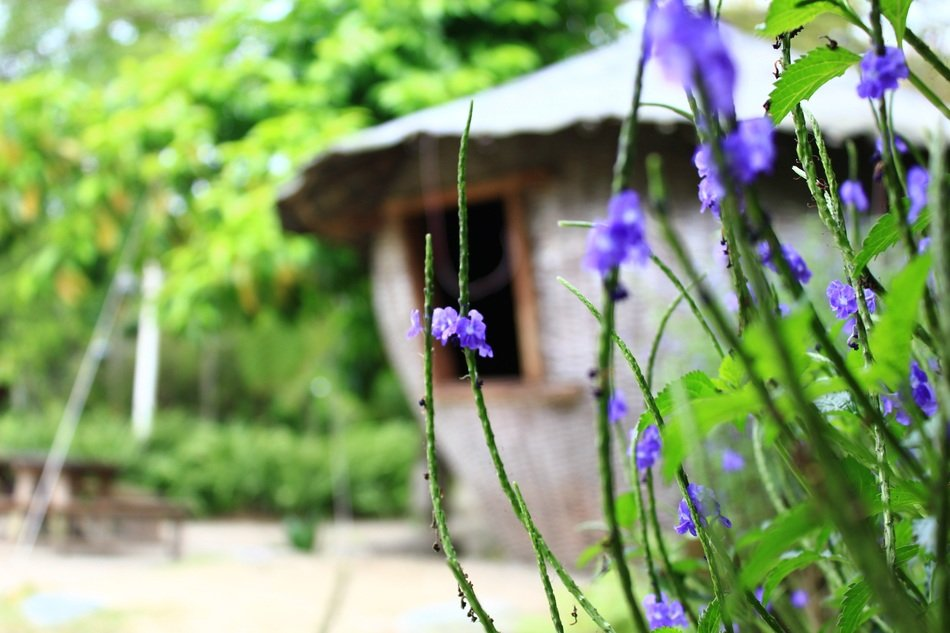 view on the hut through the blue plants