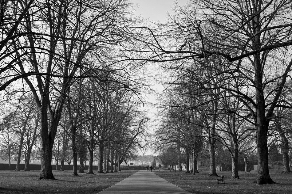 black and white photo of the track in the park