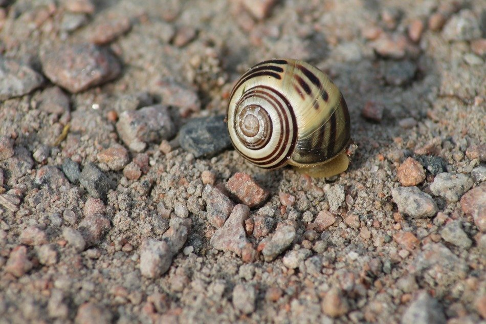 Snail on nature