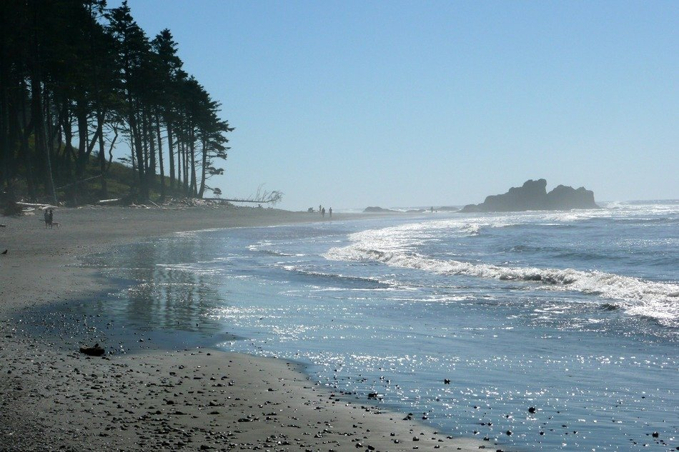 Pacific coastline in the mist in the Olympic National Park