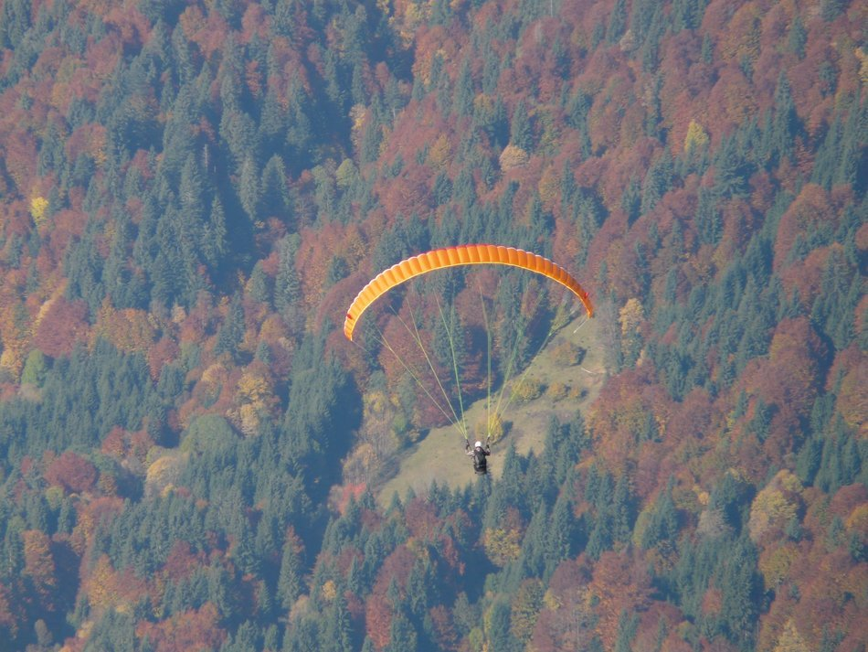 glider soars above an autumn forest