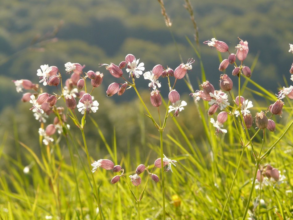 photo of delicate wildflowers