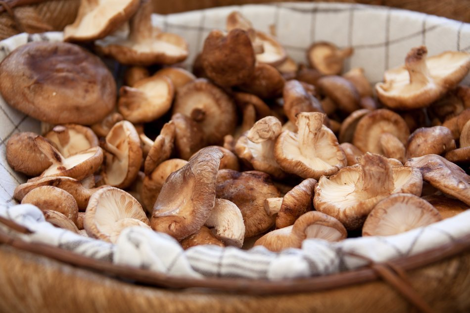 brown basket with mushrooms