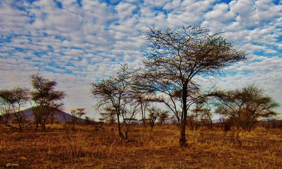 Scenic landscape in the Serengeti National Park