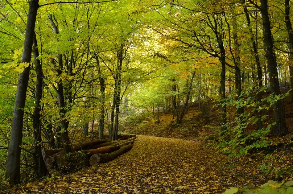 beautiful autumn forest path