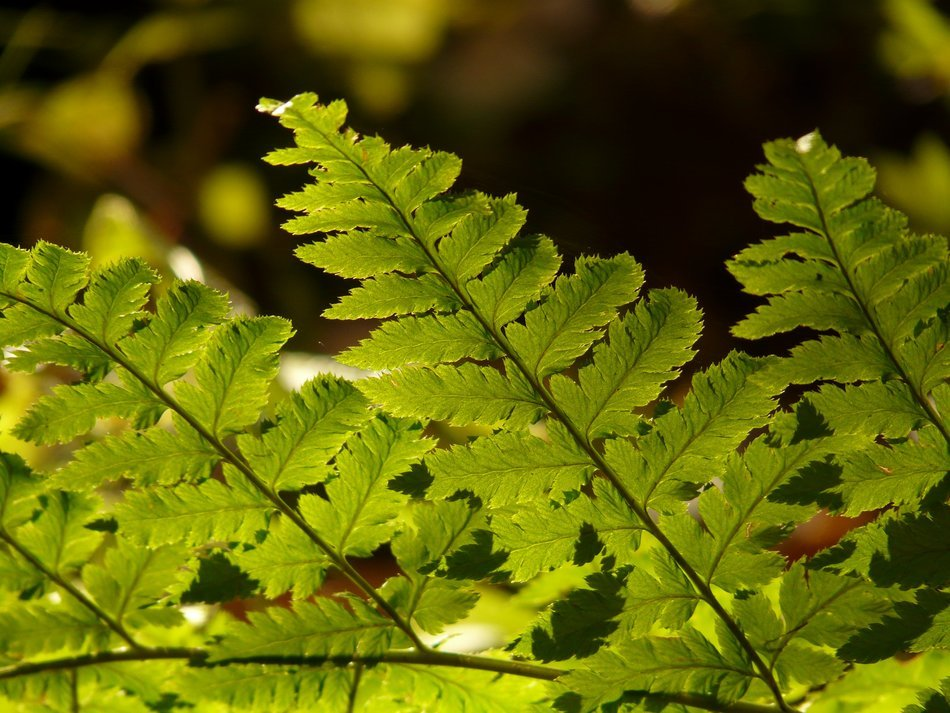 bright color fern leaf