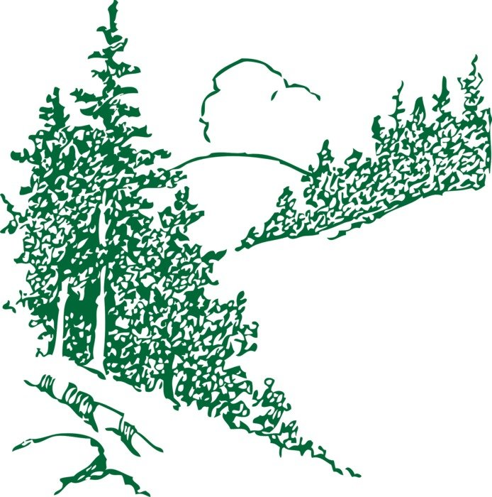 green pine trees picture