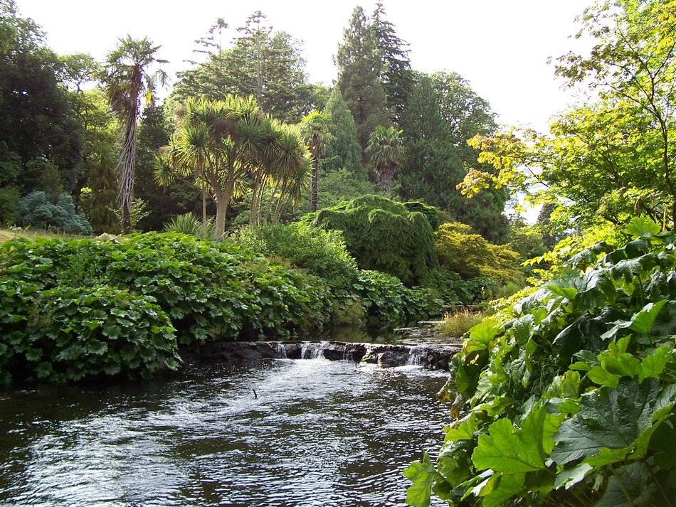 county wicklow summer river bank