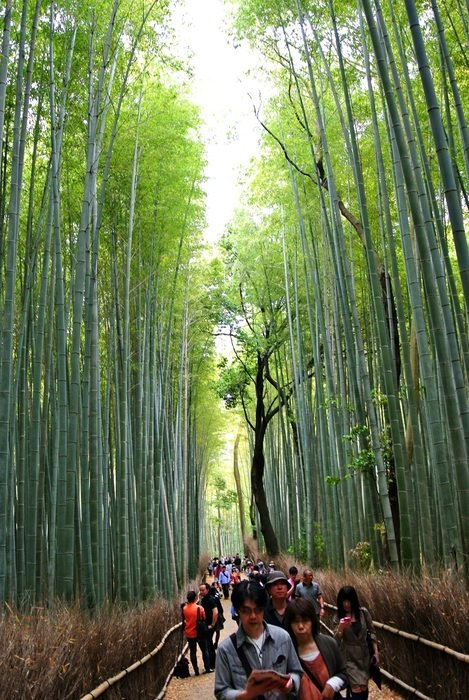people in the bamboo forest in Kyoto