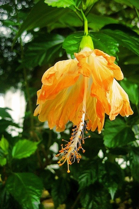 orange flower in Indonesia