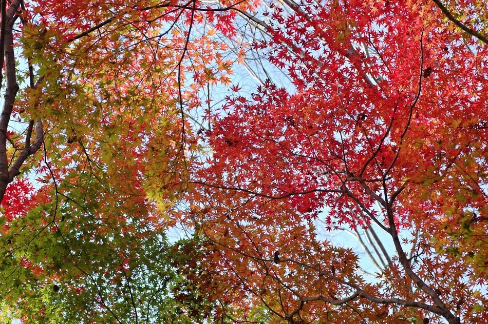 colored autumn leaves against the sky