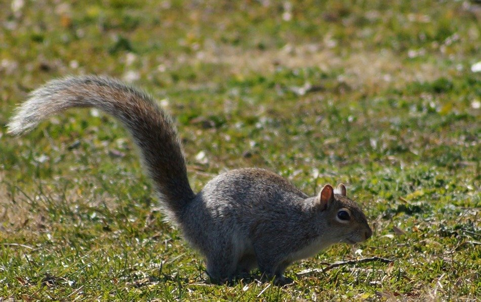 squirrel in Park Druid Hill