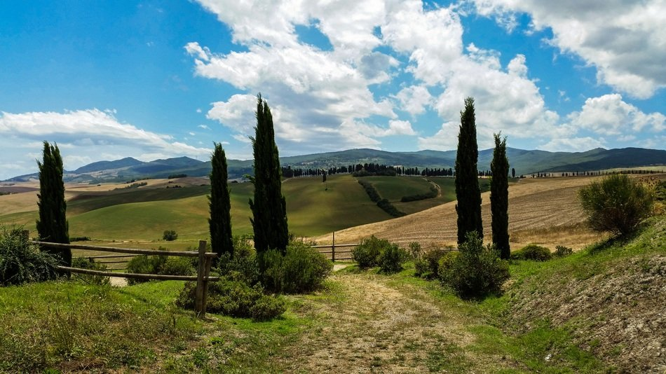 landscape of cypress trees in a valley in tuscany