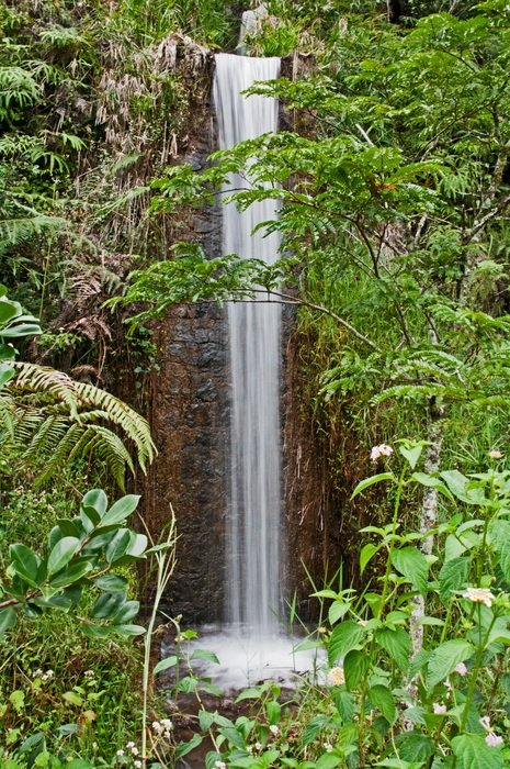 small waterfall in tropical forest, Madagascar, Amber Mountain National Park
