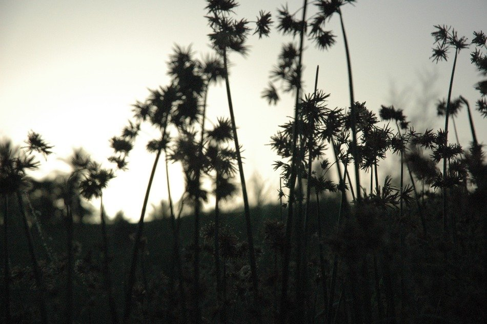 dark silhouettes plant against the sky