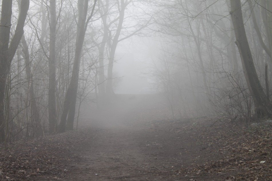Trail through foggy forest
