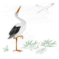 Storks white wild water bird vector
