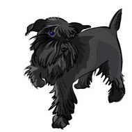 vector black dog Miniature Schnauzer breed