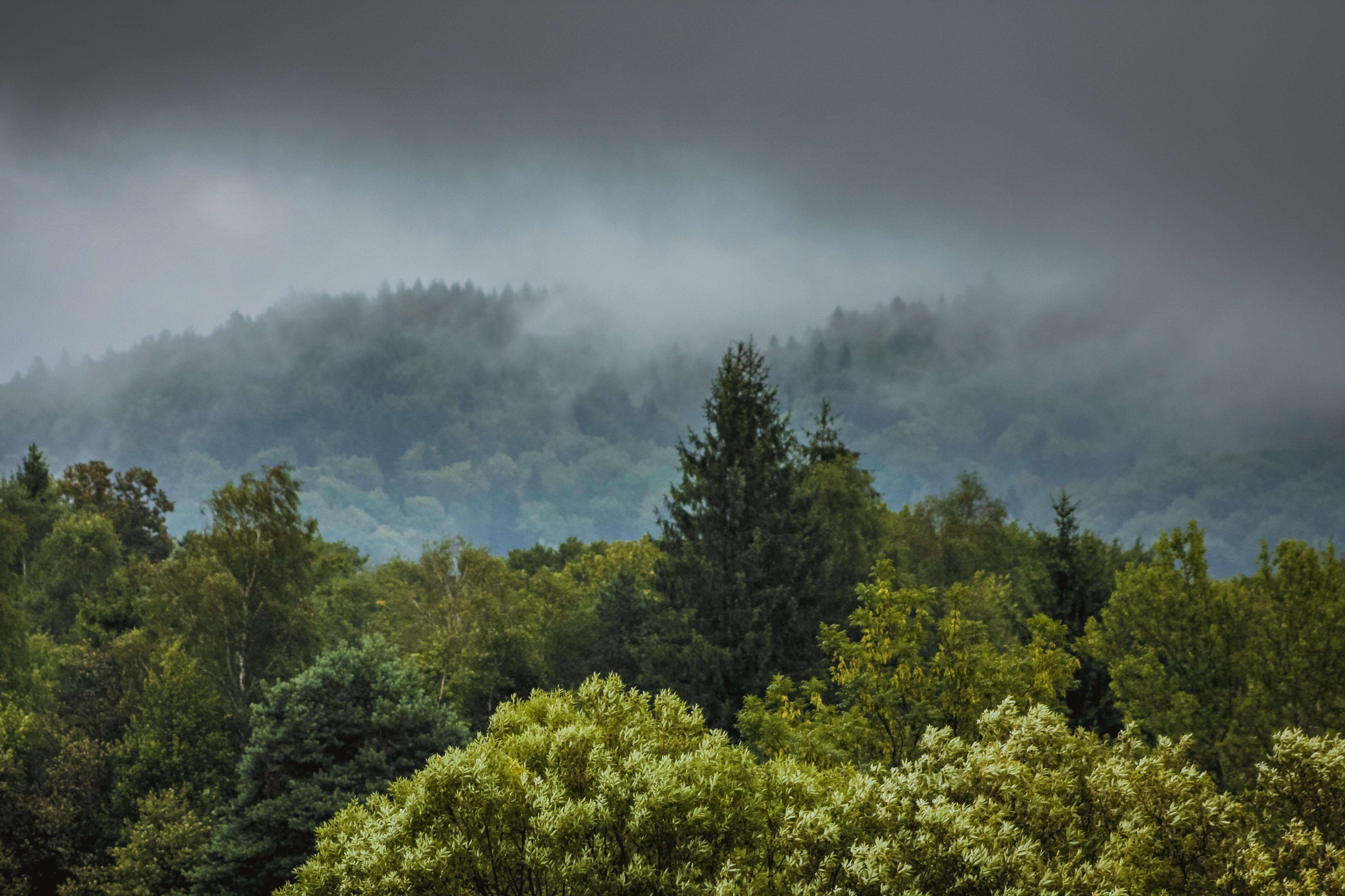 того фото дождливого леса можем