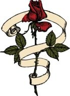 red rose and ribbon, vintage drawing