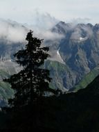 panorama view of alpines