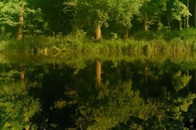 green trees reflected in the water of the lake
