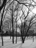 frozen trees and snow cover in the park