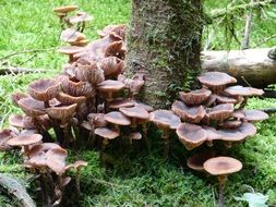 brown mushrooms around tree