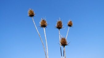 Dry plant on a background of blue sky