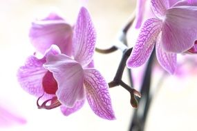 delicate pink orchid flowers on a branch