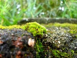 green moss in the rain close up