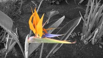 Exotic bird of paradise