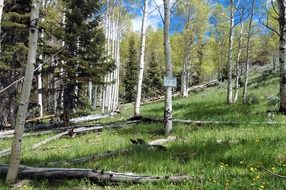 picturesque forest landscape of Nevada