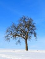 lonely tree in a winter field