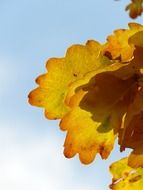 oak leaves against a bright sky