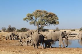 elephants in the wild namibia