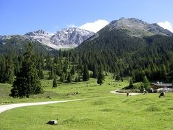 Mountain meadow in Tyrol