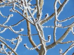 frost branch tree