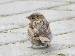 gentle and cute sparrow