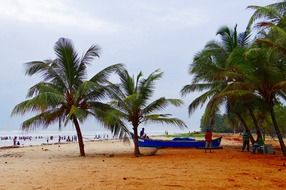 green palm trees on the beach of the arabian sea