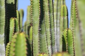 green prickly cactus plant