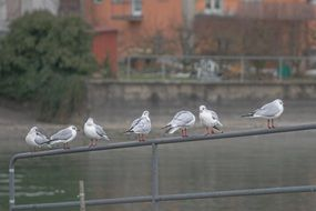 seagulls on the railing near the water