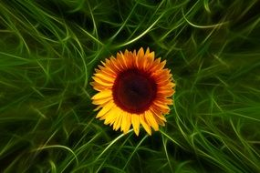 sunflower on the abstract green grass