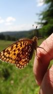 brown butterfly on a man's finger