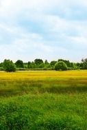 summer scenic landscape of countryside