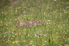 summer flower meadow close up