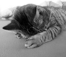Black and white photo of the relaxing cat